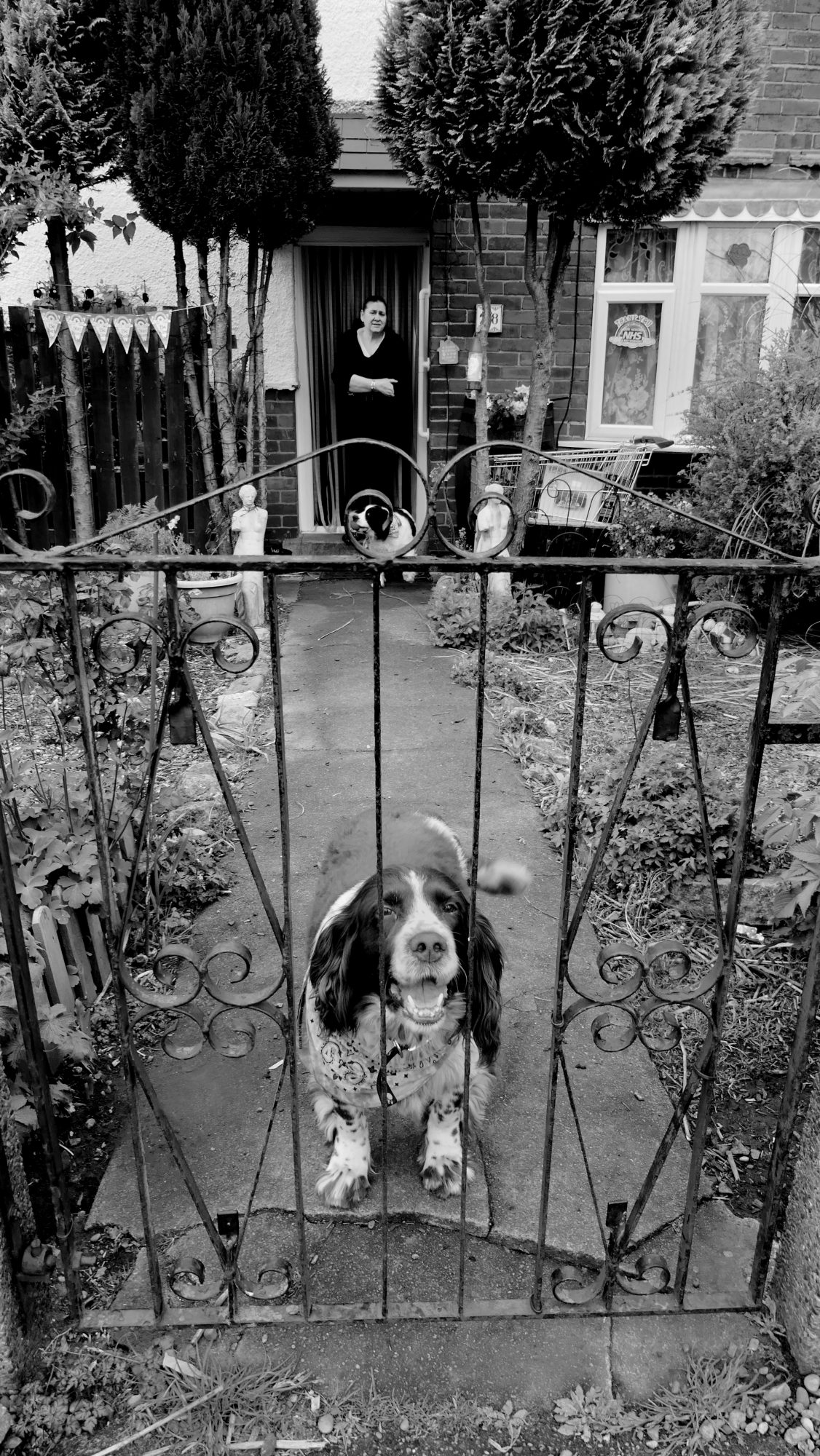 Black & White Photograph. Woman stands in doorway with one dog, whilst another dog sits behind garden gate.