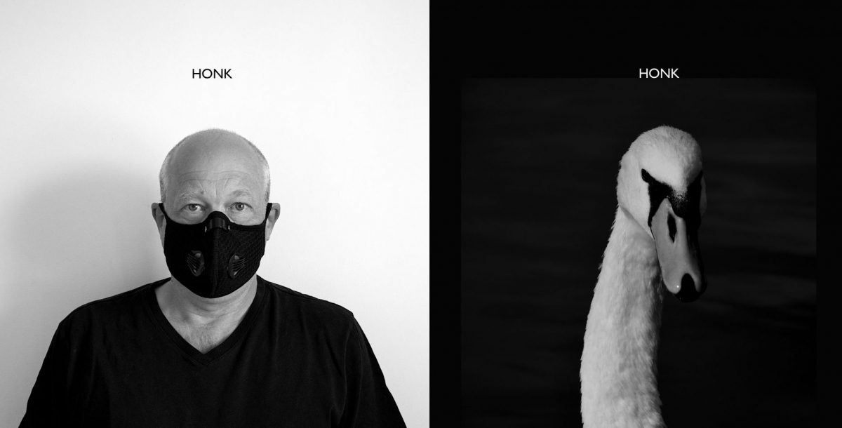 Photo of Simon Withers wearing a face mask, with the word 'Honk' above him. Next to a photo of a swan's head with the word 'Honk' above it.