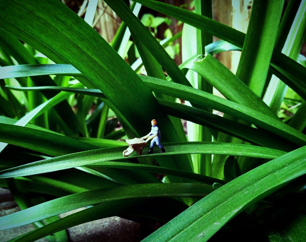 Miniature figure pushing a wheel barrow along a leaf