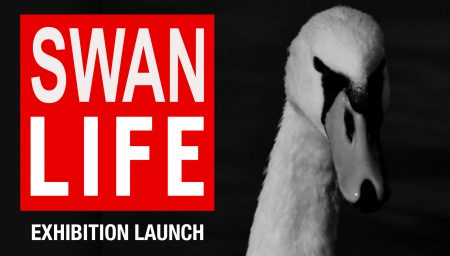 Black & White photo of a swan, with a logo saying 'Swan Life'
